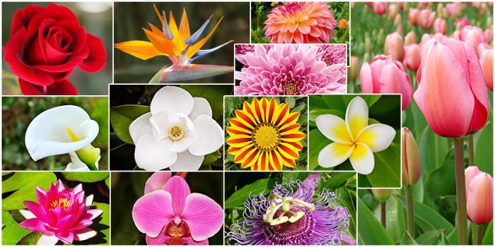 Top 10 Flowers Group