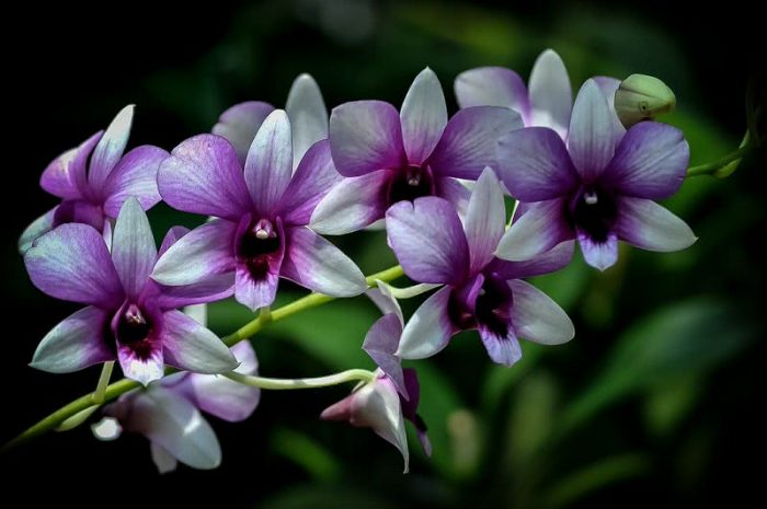 Top 10 Flowers orchid