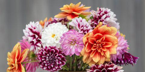 Best Flower Delivery Website