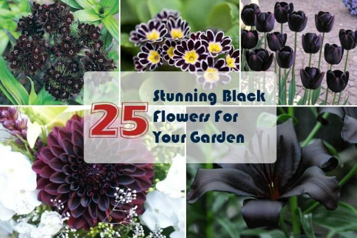 list of hardy perennial flowers