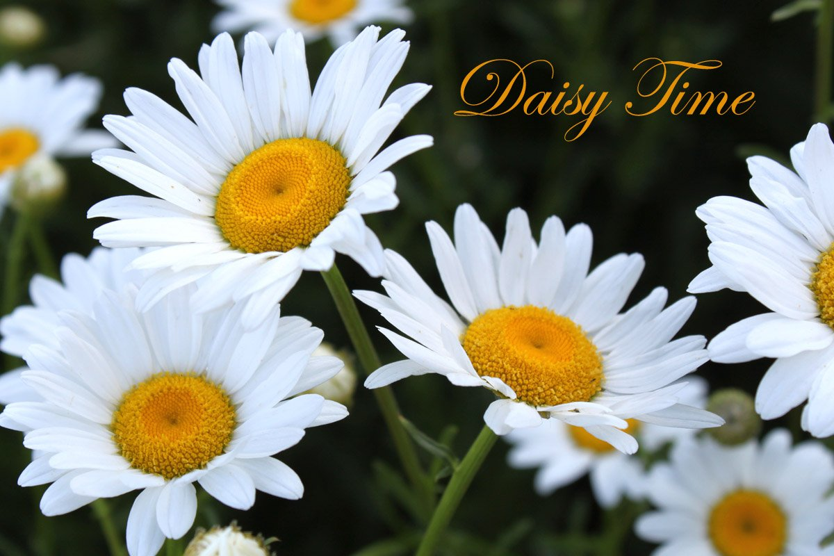 Same day flower delivery best online flowers for same today next flower delivery izmirmasajfo Gallery