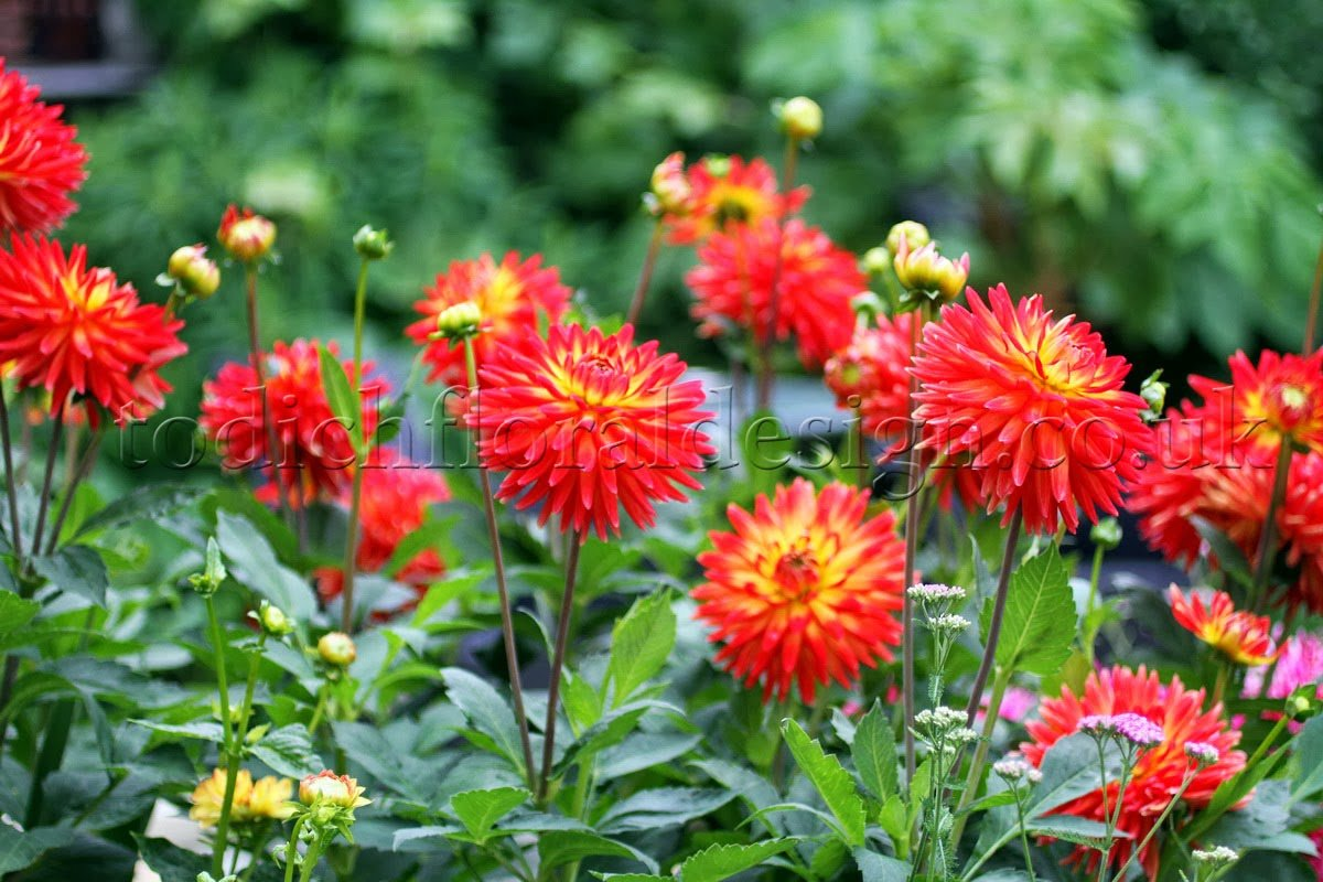 Flowers Online To Uk Red Flowers For Gardens London Gardening