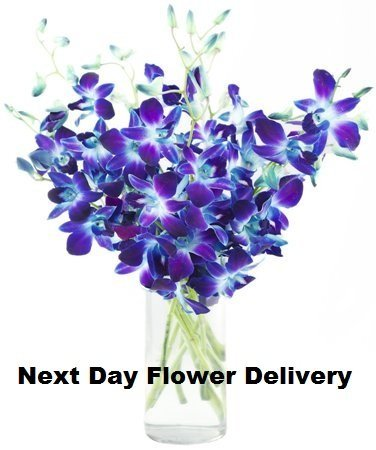 Next Day Delivery For Flowers