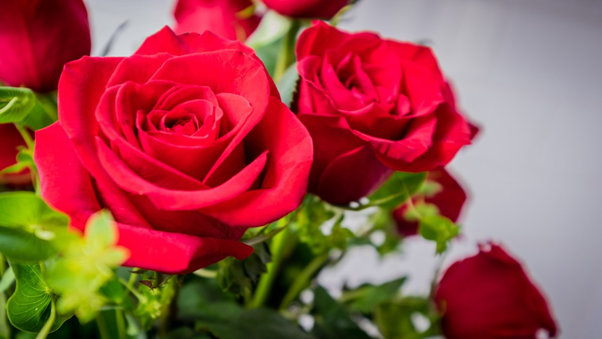 Online Flower Delivery Companies Same Day Flower Delivery