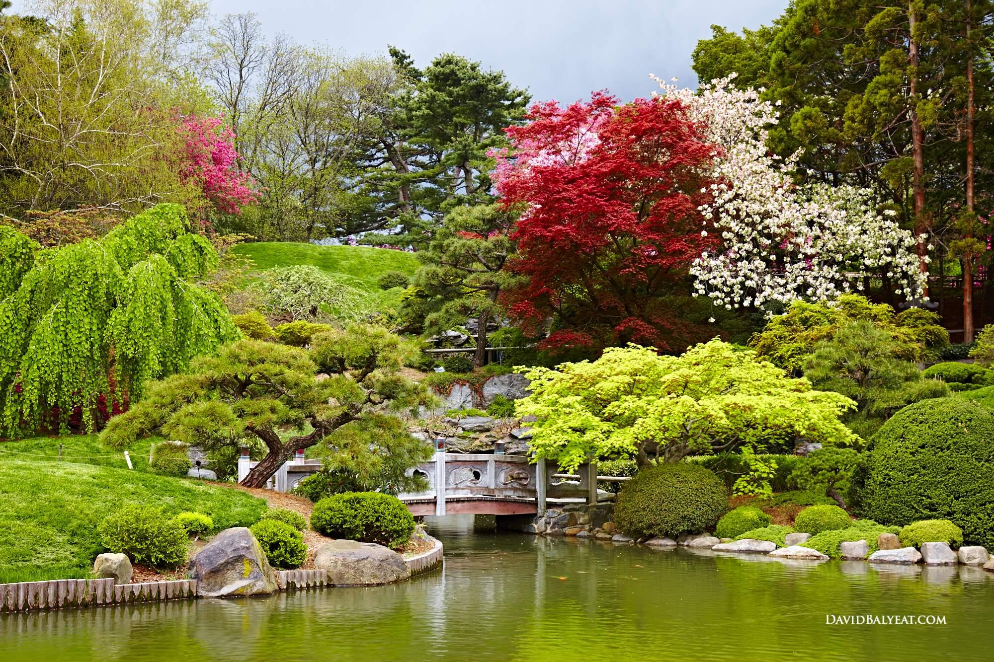 Order Flowers Dallas Brooklyn Botanical Garden Spring Cherry Blossoms Japanese  Garden Pond Bonzai Maple High Definition Hd Professional Landscape ...