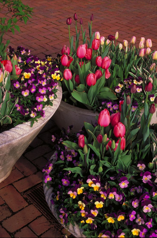 Best Spring Flowers For Pots 369c2bcb1297a238d36292fb8aad584c Garden