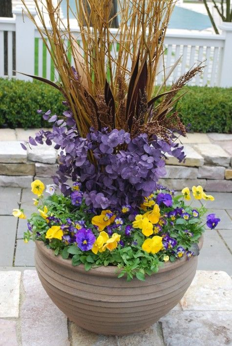 Best spring flowers for pots same day flower delivery mightylinksfo