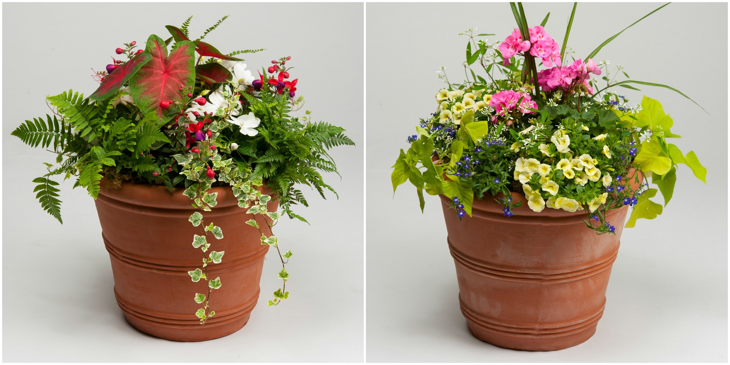 Best Spring Flowers For Pots Same Day Flower Delivery