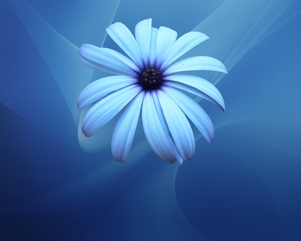 Blue flowers meaning same day flower delivery blue flowers meaning izmirmasajfo