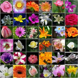 Diffe Types Of Flower Pictures With Names Flowers Healthy