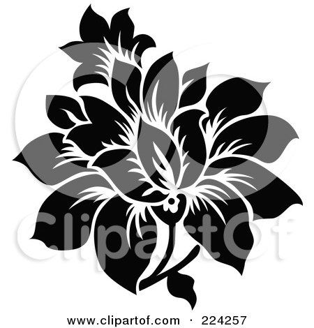 Black and white flower prints same day flower delivery by httpimgclpostersimagesimagesp 473 488 90303002r9dbf00zposters black and white print with large white flowerg mightylinksfo