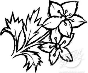 Black and white flower sketch same day flower delivery by httpimagesipartpandablack and white flower drawing beautiful black white flower hand drawing floral design element retro style 29638997g mightylinksfo