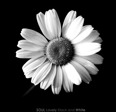 Black and white flower top same day flower delivery by http80skipartywp contentuploads201712best of clipart flower black and white flower pot black and white clipart clipart suggest clipart flower mightylinksfo