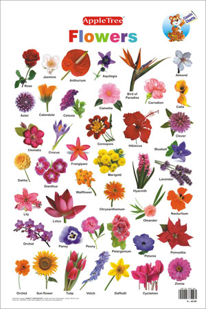 Books About Flowers And Their Meanings Same Day Flower Delivery