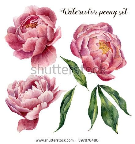 Chinese white flower same day flower delivery by httpsthumb1utterstockdisplaypicwithlogo3903503597876488stock photo watercolor peony set vintage floral elements with peony flowers and mightylinksfo