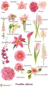 Diffe Types Of Flowers Images And Names Flowers Healthy