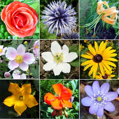 Different Types Of Flowers And Their Names Same Day Flower Delivery
