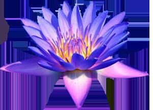 Egyptian lotus flower same day flower delivery by httpthumb101utterstockdisplaypicwithlogo1047346125308457stock vector lotus flower lotus flower vector image buddha buddhism symbol of mightylinksfo