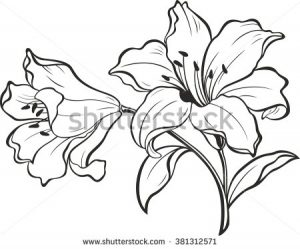 Egyptian Lotus Flower Same Day Flower Delivery