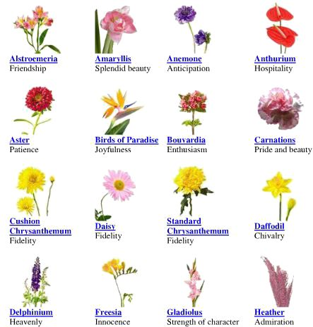 Flower Meanings Same Day Flower Delivery