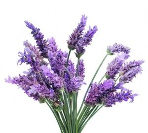 Purple Flowers Meaning Lavender 300268 Same Day Flower Delivery