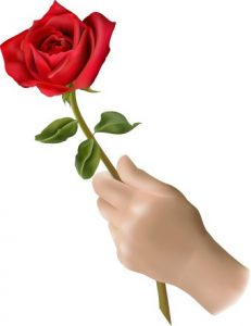 Single Red Rose Same Day Flower Delivery