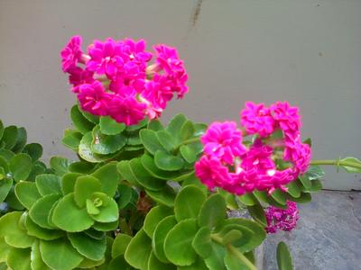 Small Dark Pink Flowers Names Same Day Flower Delivery