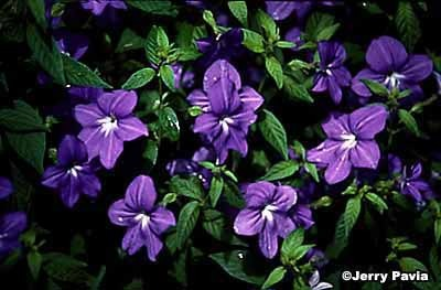 Types Of Spring Flowers Same Day Flower Delivery
