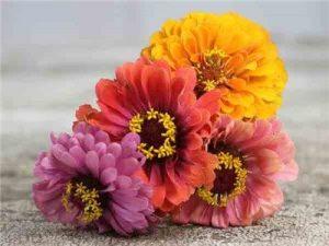 Flower and garden dates buy plants flower gardening