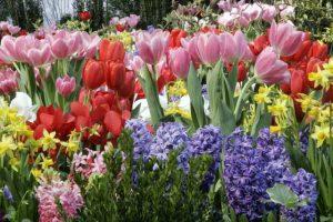 Nj Flower And Garden Show