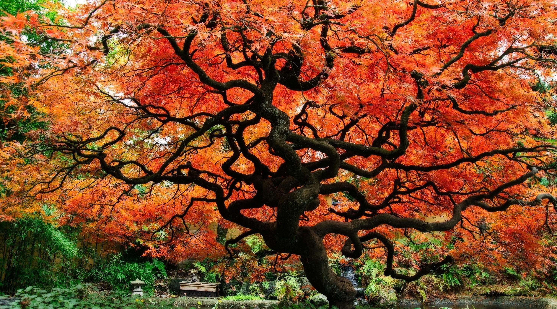 Japanese Garden Background