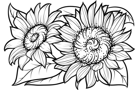 Sunflowers coloring pages (Supercoloring.com)