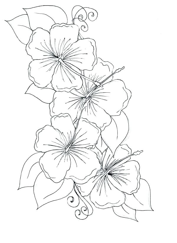 Flowers sketch easy (Studens.info)