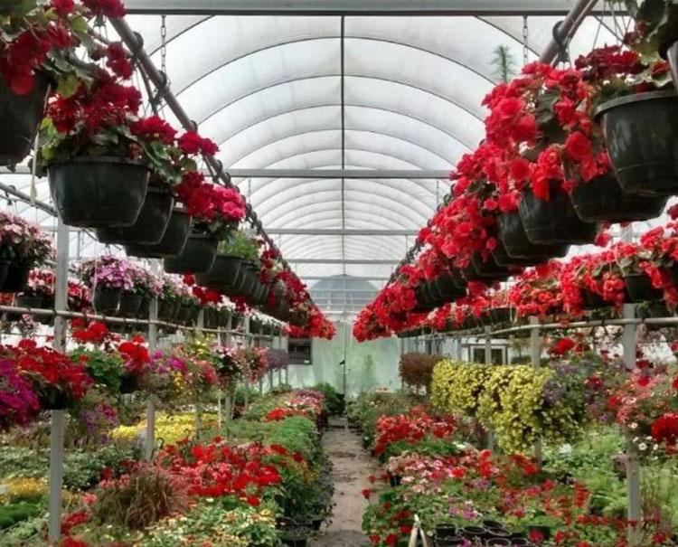 Garden Nursery Asheville Nc