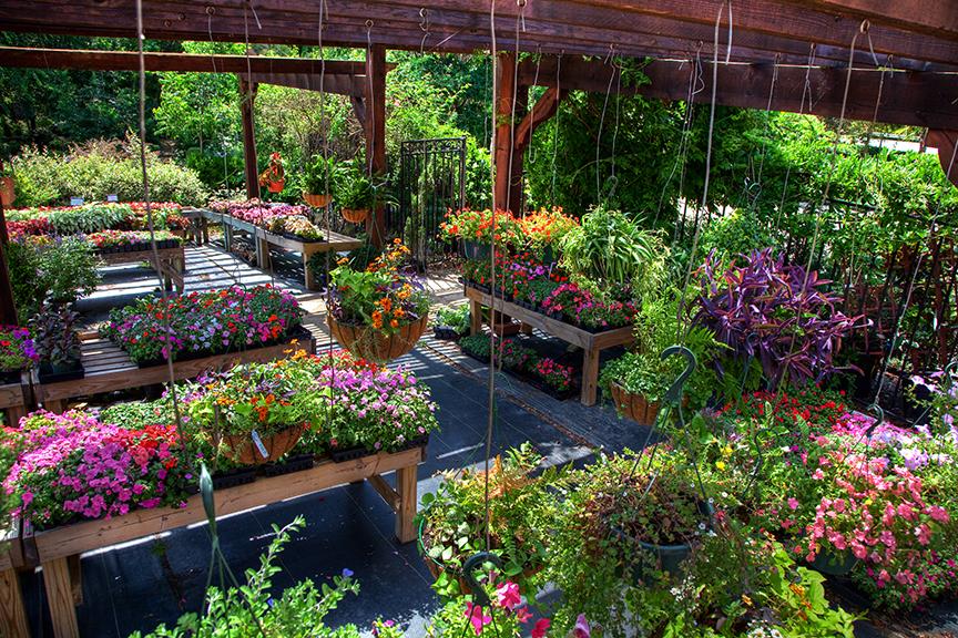 Garden Nursery Frome