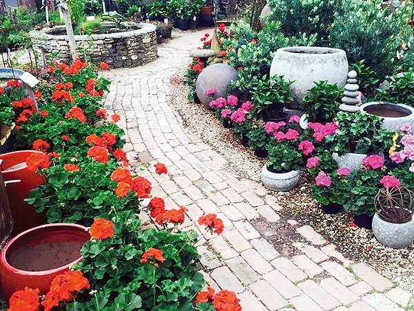 Garden Nursery Gisborne