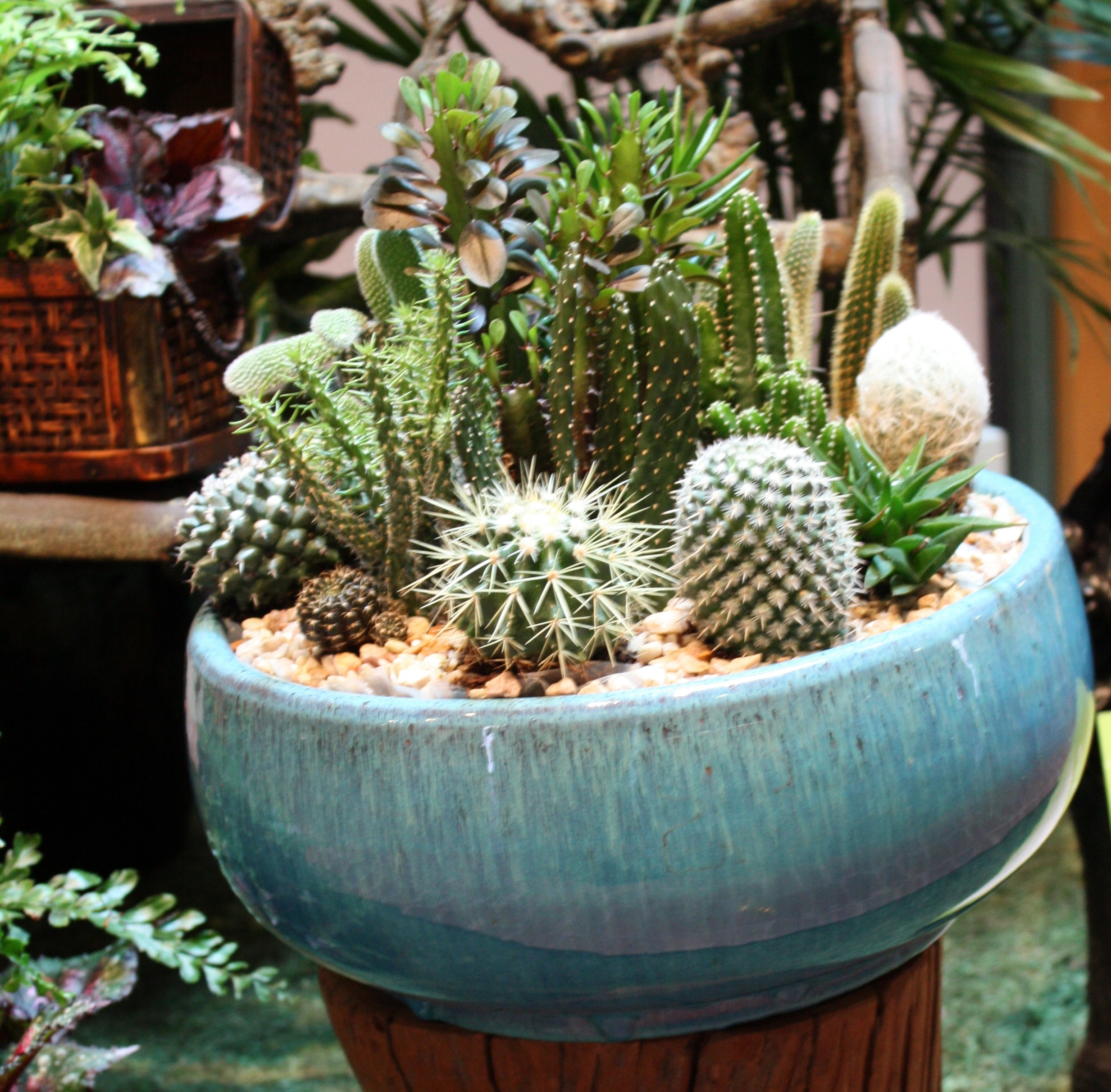 Dish Garden Design Easy