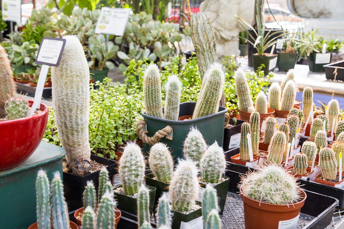Garden Nursery Austin Tx