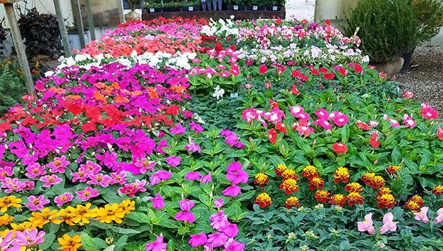 Garden Nursery For Sale Near Me