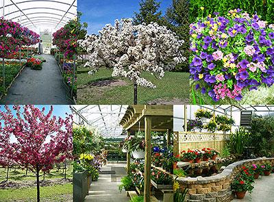 Garden Nursery Hobart