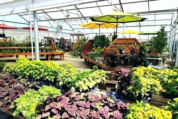 Garden Nursery Houston