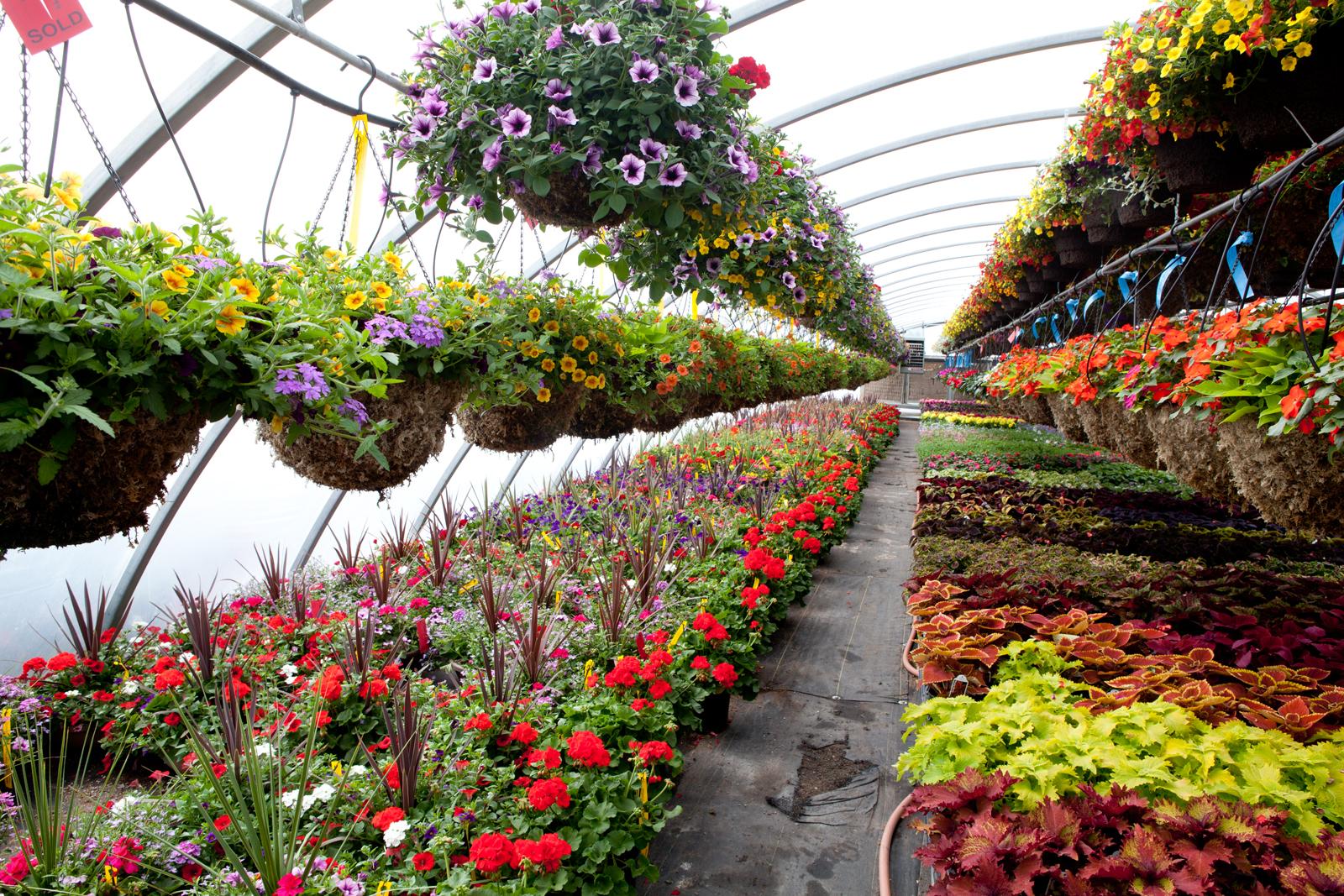 Nursery Garden Flowers
