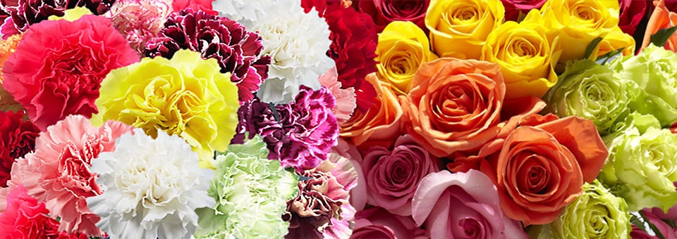 The Definitive Approach to Rose Flowers