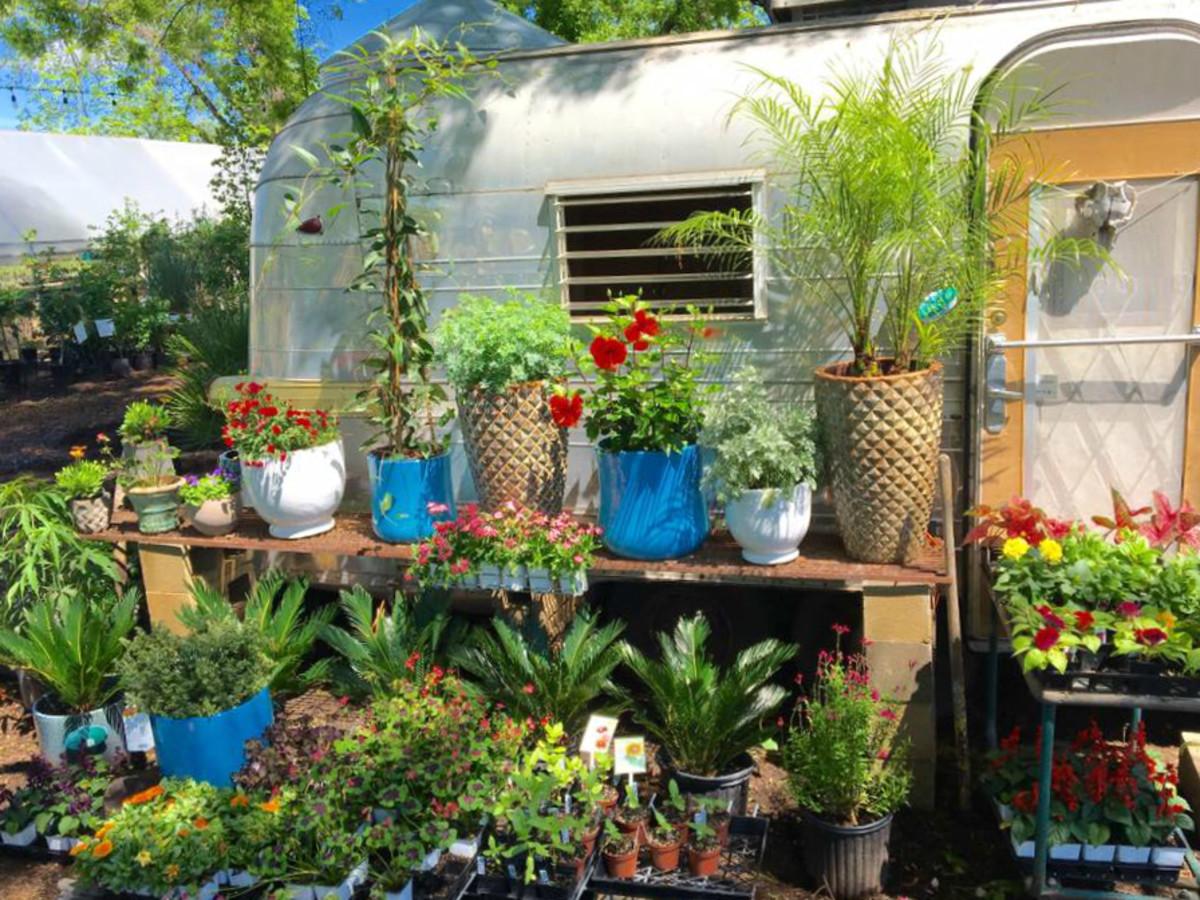 Garden Nursery Austin