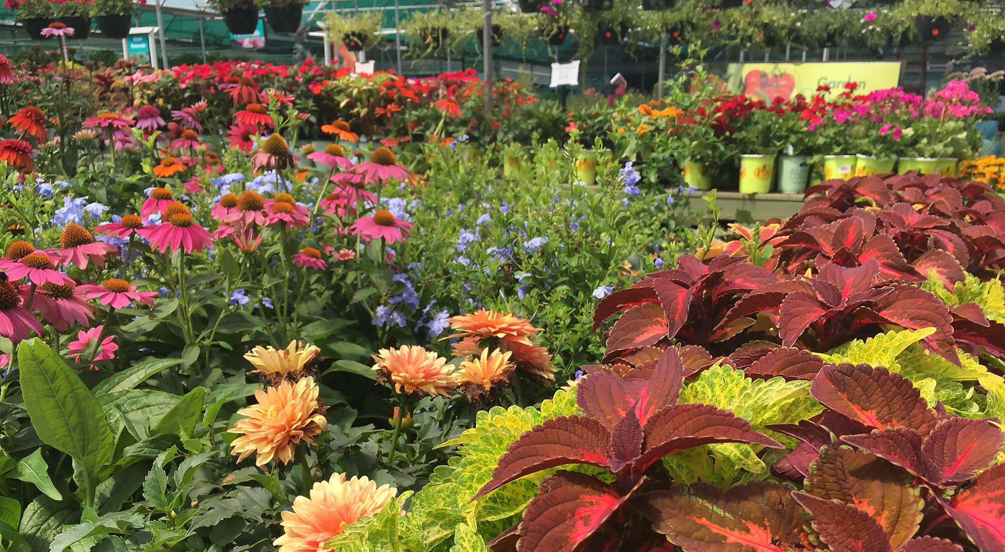 Garden Nursery Hiring