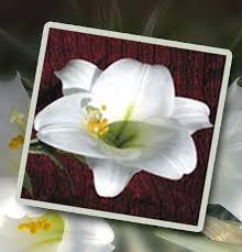 Lili Deloren's Flower Varieties