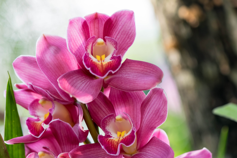 The most expensive types of orchids in the world