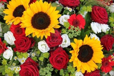 Red roses and sunflowers wallpaper
