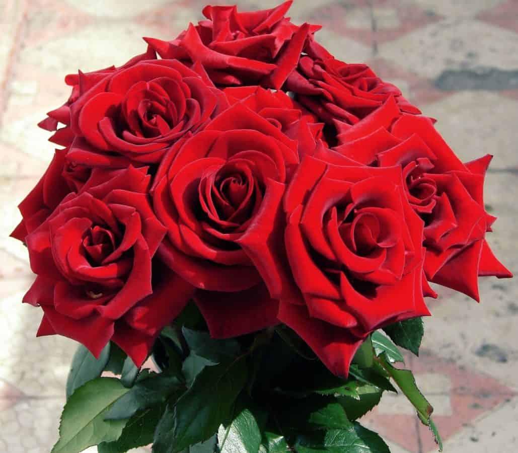 A Roses Bouquet