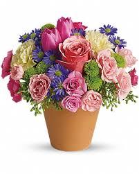 Roses flower have more than 259 varieties